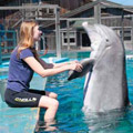 Student Maia Goguen works with one of the Marine Mammal.